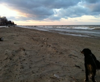 Our dog on the beaches of Lake Ontario.