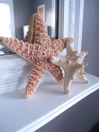 Dainty Details: Starfish
