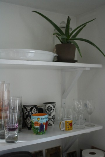 Little kitchen aloe plant is almost outgrowing it's space on my open kitchen shelf.