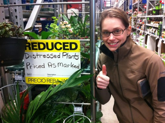 Save the Distressed Plants. Is that an Orchid? Score!