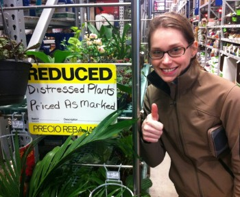 Saving sale plants!