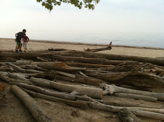 Beach logs. And no horizon.