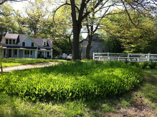 Fruit farm and boarding stables. My dream property.