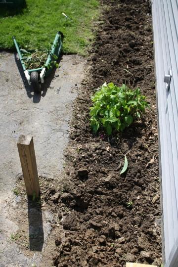Front garden post-weeding.
