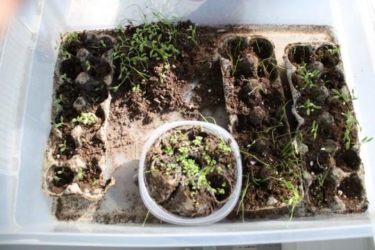 Plants flourishing in the sunroom.