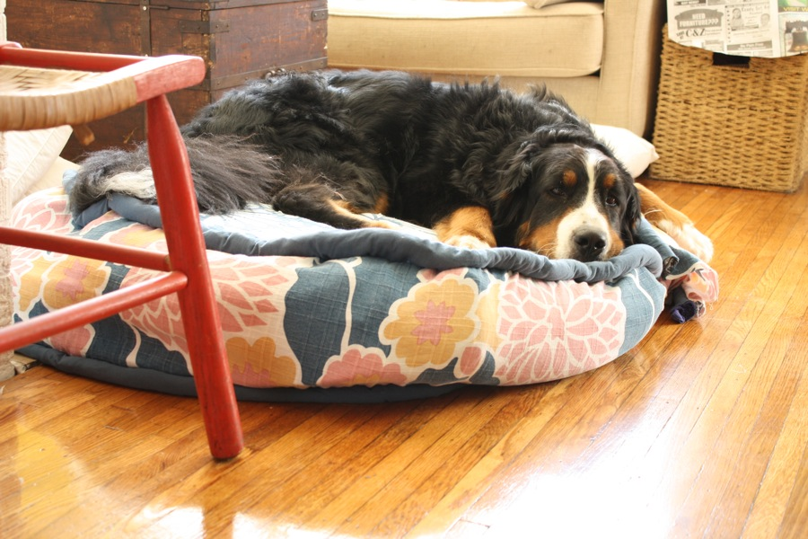 homemade diy let raised handmade and crates you breeds dog for diyncrafts projects large that pamper pup beds bed your easy