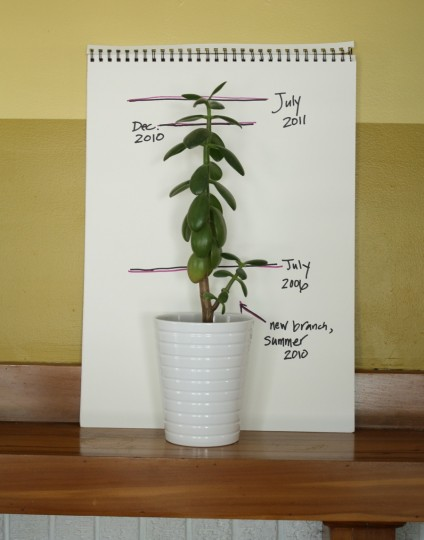 Jade's growth chart.