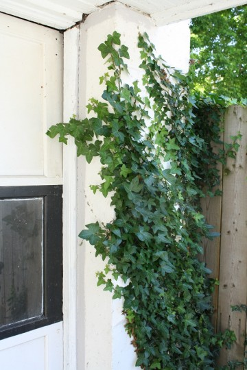 Blocks on the right side of the garage door are covered in ivy.
