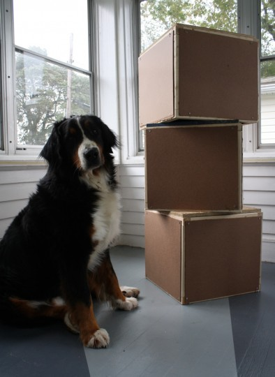 Finished boxes. And a curious dog.