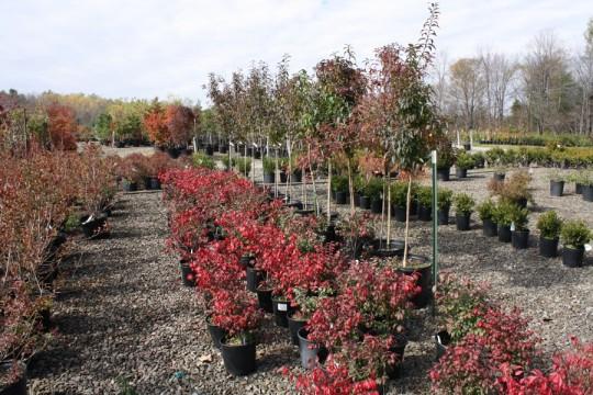 Plantasia Nursery