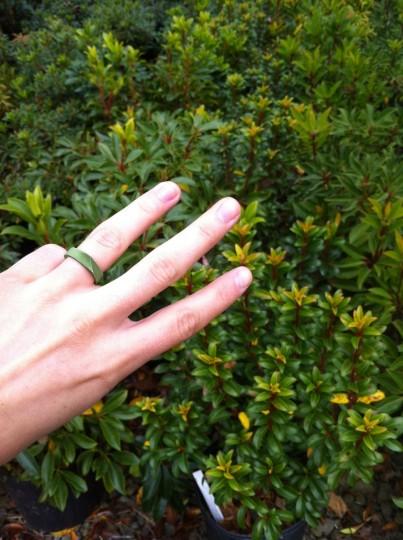 Three Mountain Laurel plants too, please.