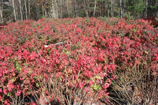 Burning Bush (for as far as we could see).