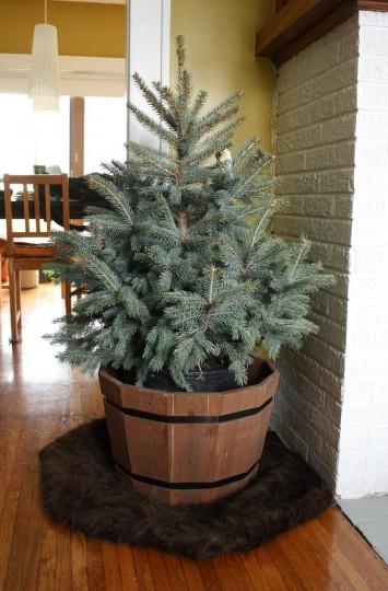 A mini-tree.