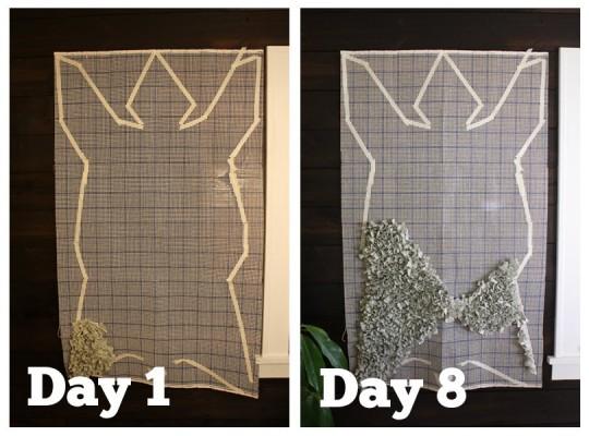 Bear rug growth. Week 1.