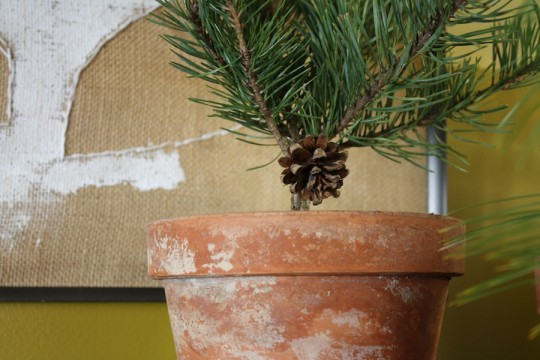 Tiny tree, tiny pine cone cuteness.