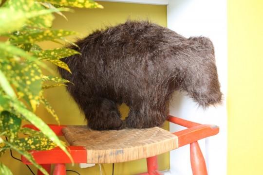 Bear pillow.