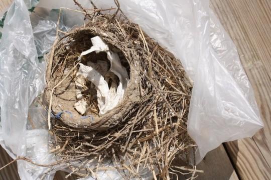 Perfect little bird nest.