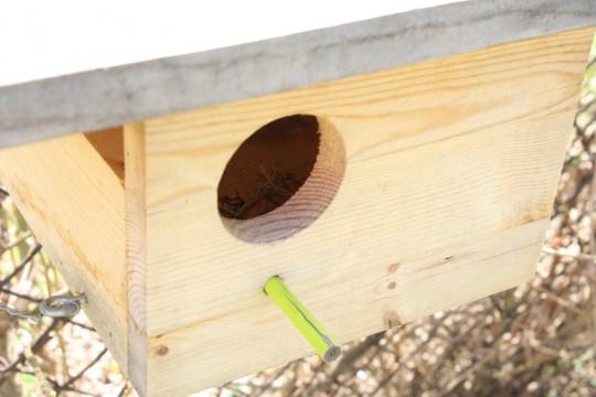 Do we have new bird neighbors? Welcome!