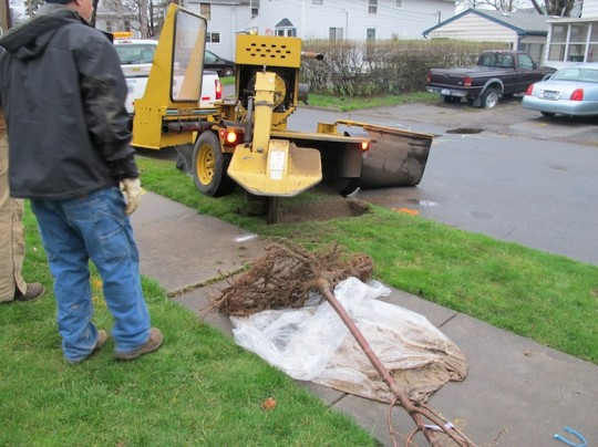 Stump grinder to create a space for the new tree.
