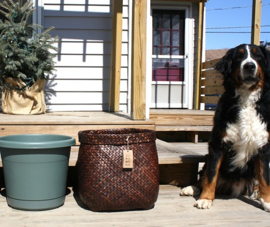 Meet: The West Elm Cara Basket.