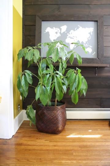 West Elm Basket turned planter.