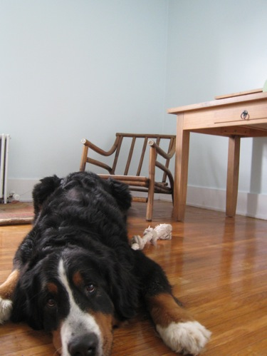 Cody, the desk that's now painted and in the office, and... the chair.