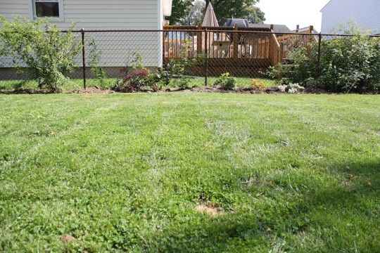 Cleared and improved garden bed.