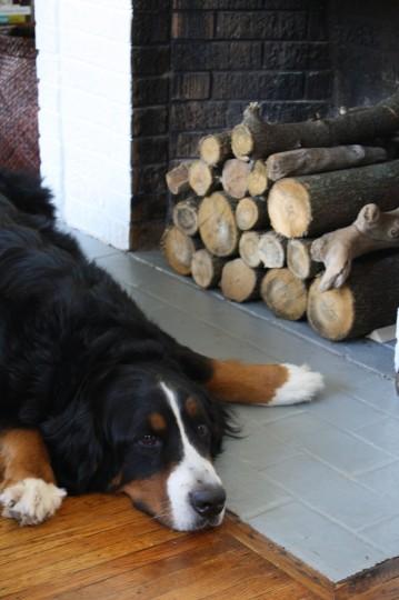 Cute dog face, pretty logs.