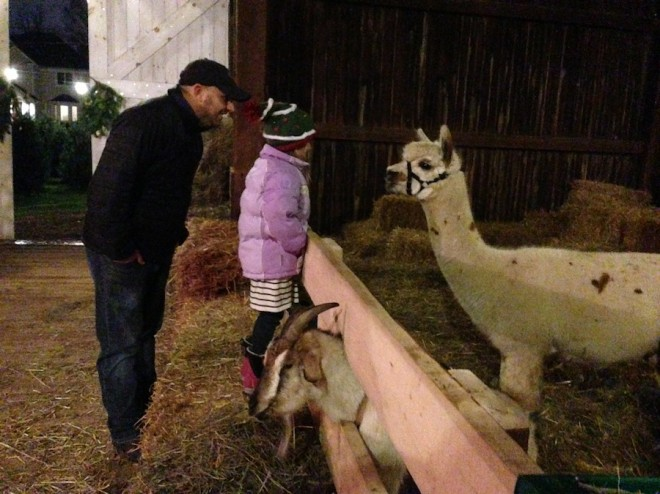 Alpaca lovin' with Pete and Julia at the Christmas Tree farm.
