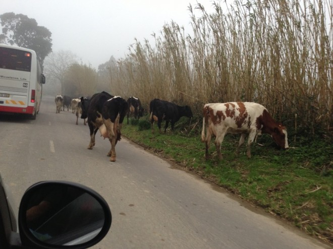Cowjam, yo. (There were several tour busses on these narrow, bumpy dirt roads but we rarely saw other tourists outside of our hotel).
