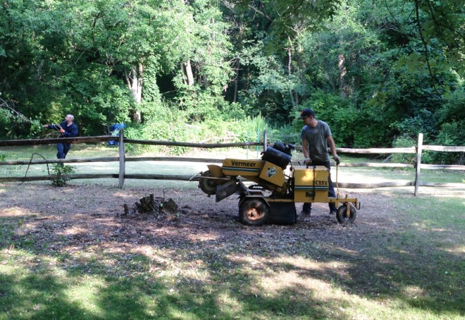 We hired a stump remover to take care of the 4' wide base of the matrimonial vine.