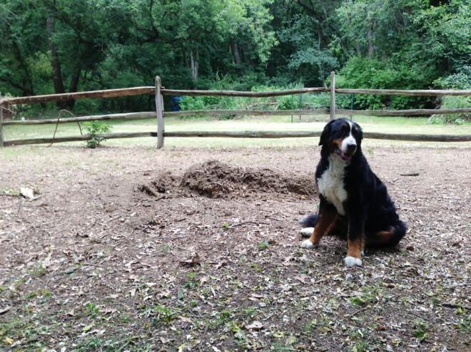 Open backyard, sans stump.