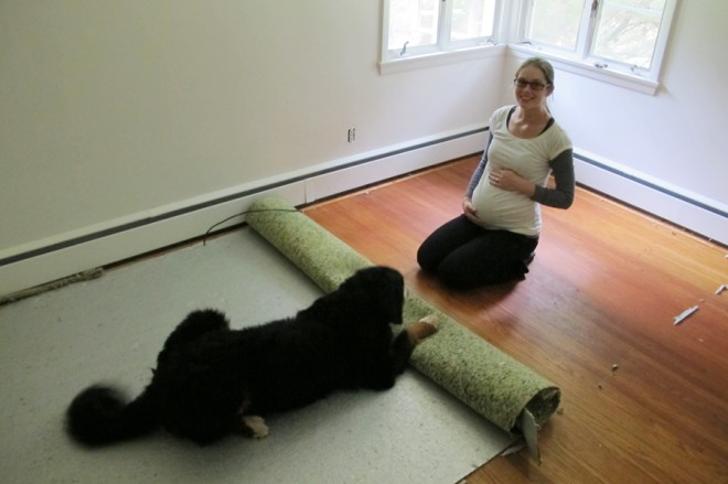 Happy homeowner removing carpeting, very uncooperative dog.