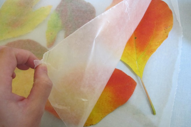 Leaves preserved in wax paper!