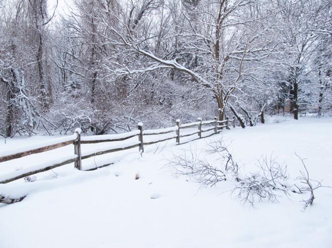 Backyard, February 2014.