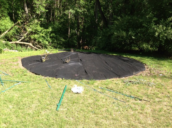 Tacking weed blocking fabric onto our garden.