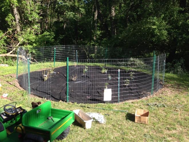 "48"" metal fence enclosure in our garden."