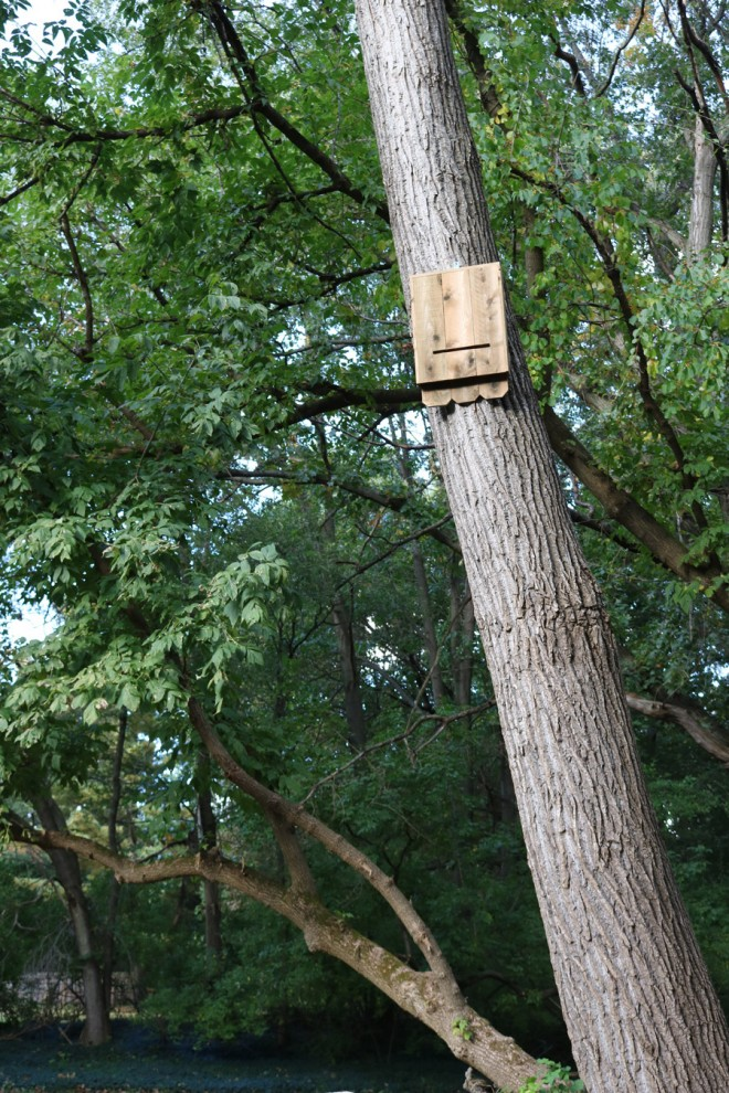 How to make a cedar bat house.