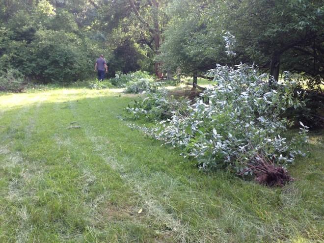 Backyard, Summer 2013.