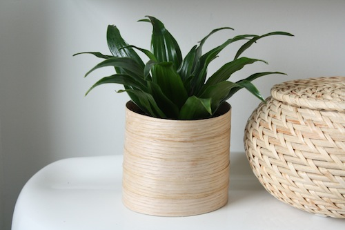 Make planters out of iron-on veneer tape.