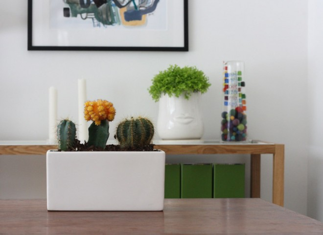 Gather cacti in a small planter.