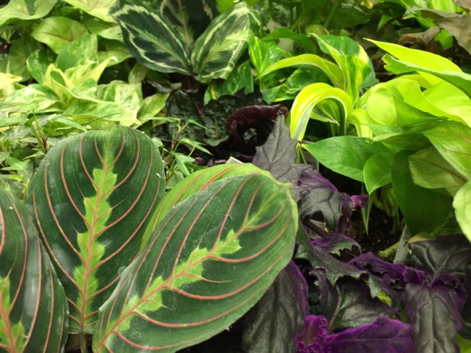Choosing indoor plants that will thrive all winter.
