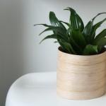 Modern veneer planter.