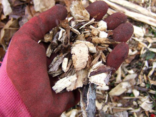 How to choose mulch for your landscape and garden.