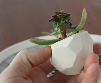 DIY faceted clay planters as wedding favors.