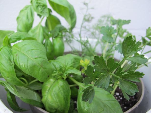 Gift idea: Edible Garden