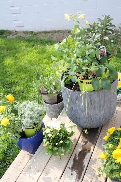 Planning a planter garden.