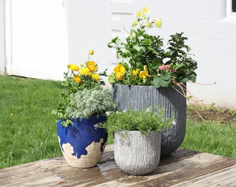 How to plan and organize a flower and herb garden in planters.