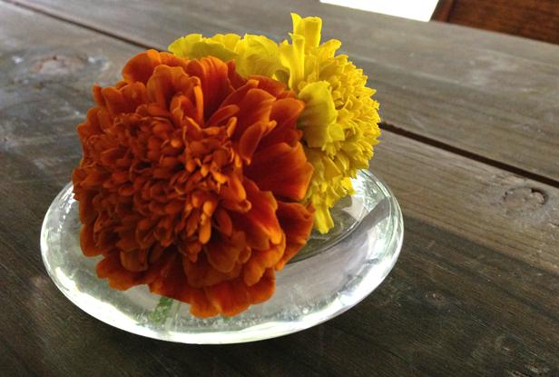 Springtime marigolds.