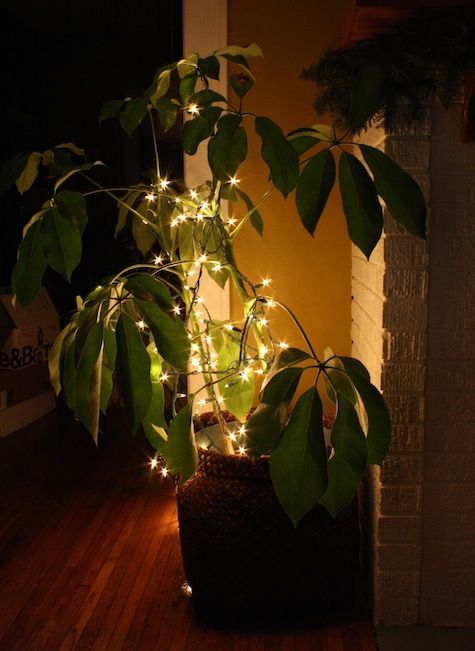 Decorate indoor plants with lights for the holiday.
